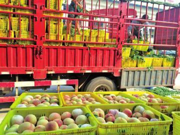 龙岗水果配送公司