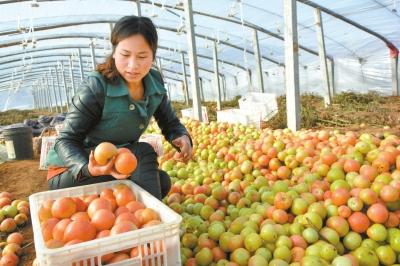 深圳新鲜水果配送公司