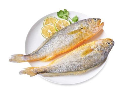 黄花鱼配送